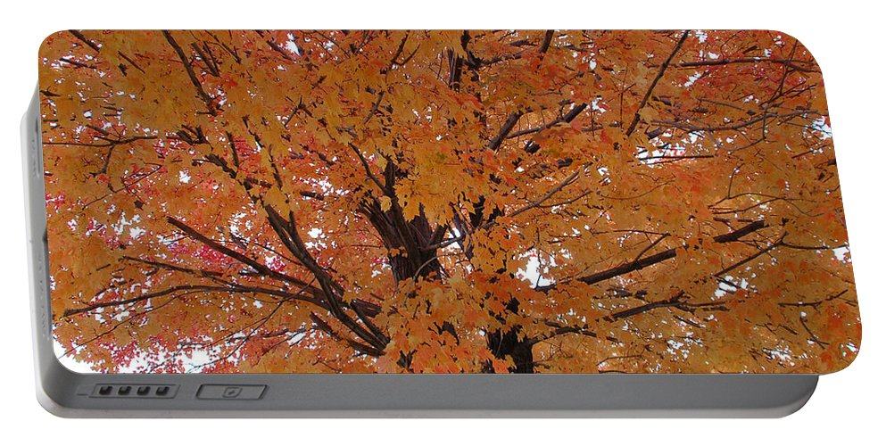 Autumn Portable Battery Charger featuring the photograph Golden Tree by Aimee L Maher ALM GALLERY