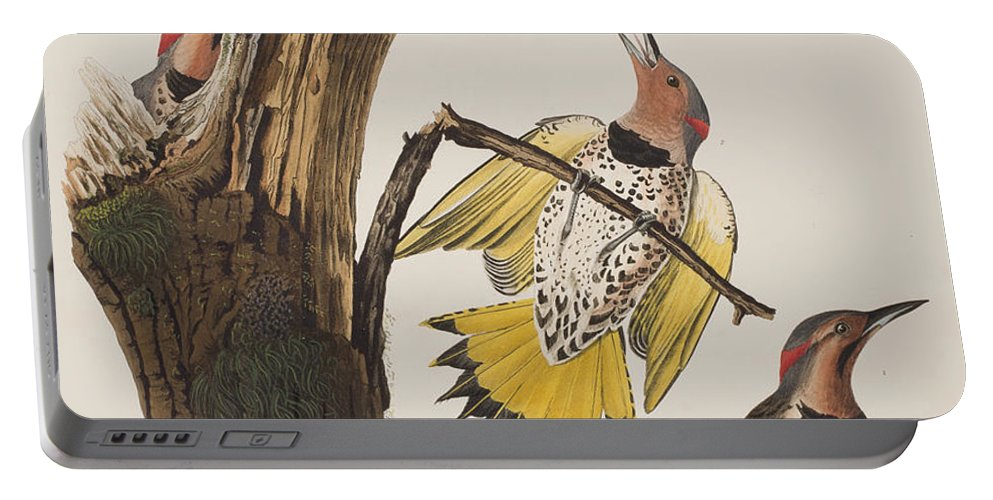 Golden-winged Woodpecker Portable Battery Charger featuring the painting Golden-winged Woodpecker by John James Audubon