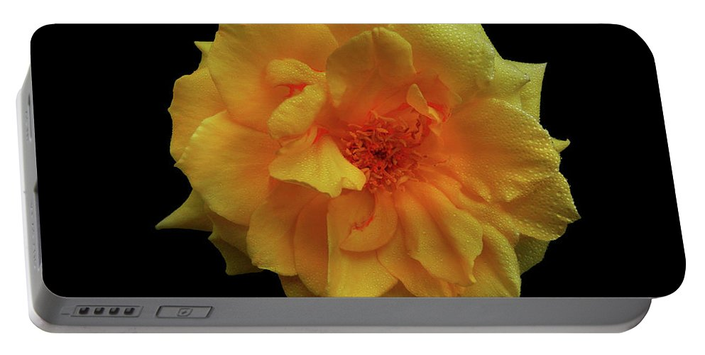 Rose Portable Battery Charger featuring the photograph Golden Wonder by Mark Blauhoefer