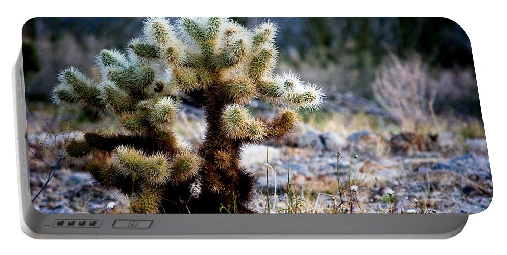 Teddy Bear Cholla Portable Battery Charger featuring the photograph Good Morning Teddy by Chris Brannen