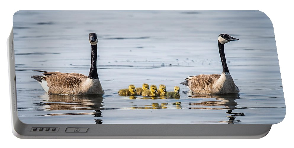 Two Geese Portable Battery Charger featuring the photograph Goose Family by Paul Freidlund