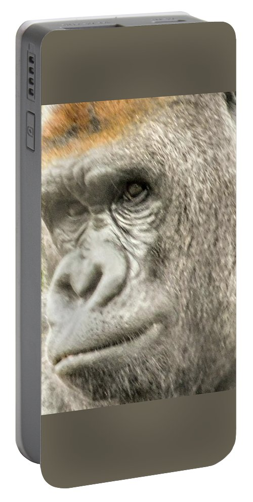 Anirmal Portable Battery Charger featuring the photograph Gorilla - Como Zoo, St. Paul, Minnesota by Curtis Tilleraas