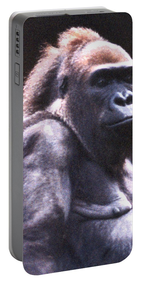 Gorilla Portable Battery Charger featuring the photograph Gorilla by Steve Karol