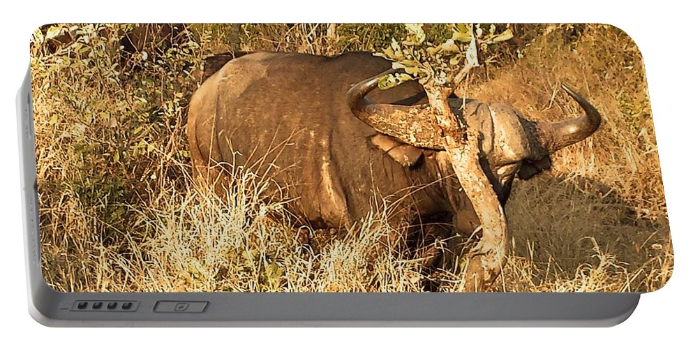 Buffalo Portable Battery Charger featuring the photograph Got An Itch by Lisa Byrne