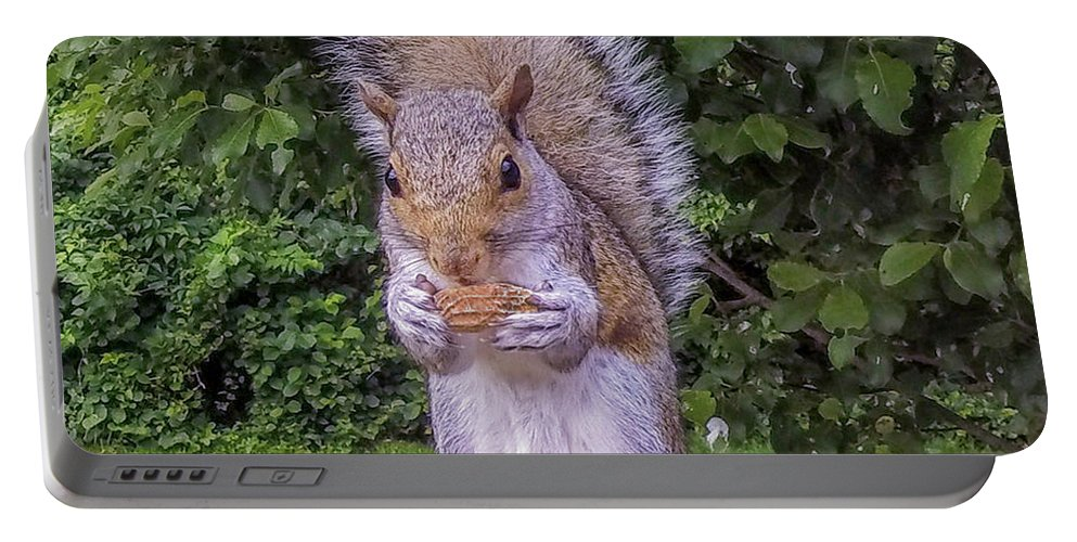 Squirrel Portable Battery Charger featuring the photograph Got Nuts? by Raymond J Deuso