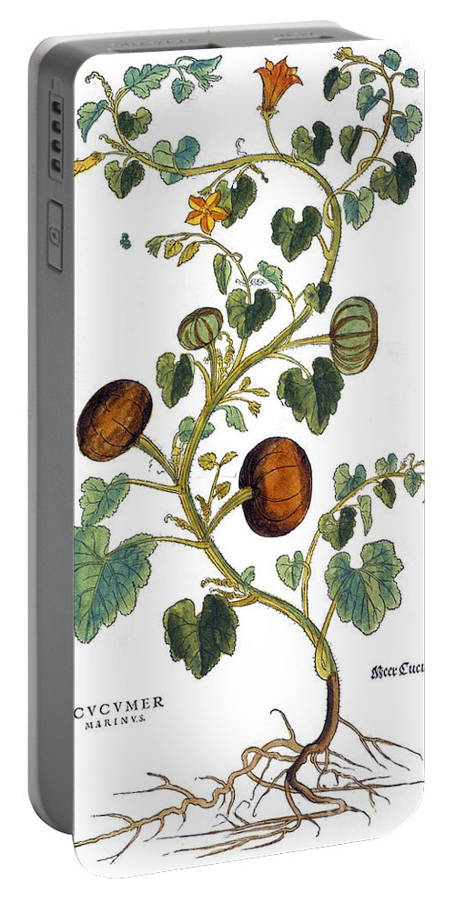 1730s Portable Battery Charger featuring the photograph Gourd, 1735 by Granger