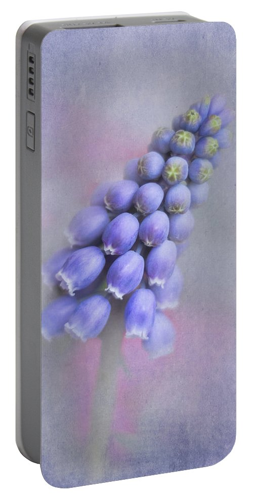Grape Hyacinth Portable Battery Charger featuring the photograph Grape Hyacinth by David and Carol Kelly