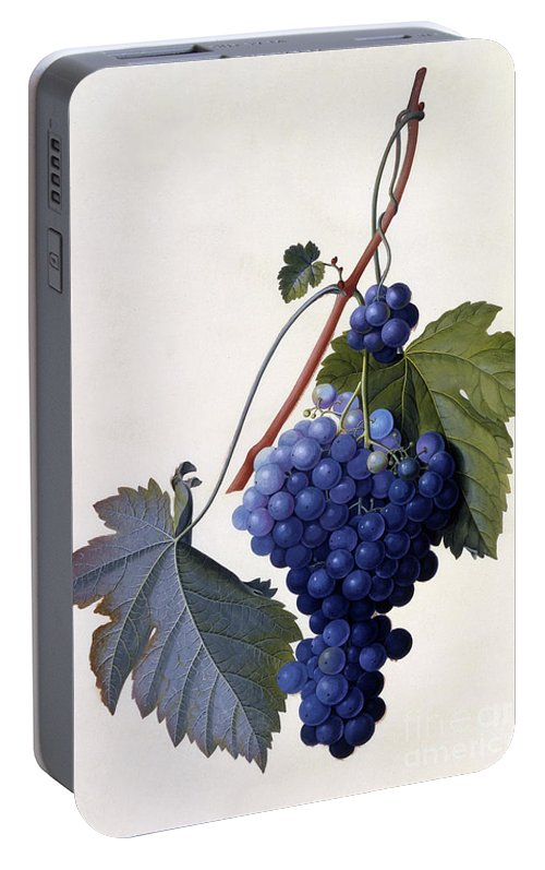 Grape Portable Battery Charger featuring the painting Grapes by Georg Dionysius Ehret
