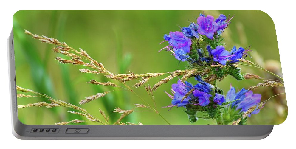 Viper's Bugloss Portable Battery Charger featuring the photograph Grass And Flower by Lyle Crump