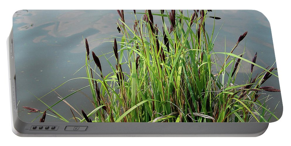 Outdoors Portable Battery Charger featuring the photograph Grasses With Seed Heads by Rod Johnson