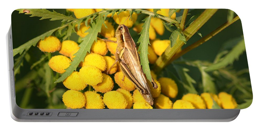 Bug Grasshopper Plants Flowers Nature Yellow Wild Life Green Weed Portable Battery Charger featuring the photograph Grasshopper by Andrea Lawrence