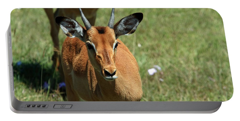 Deer Portable Battery Charger featuring the photograph Grassland Deer by Aidan Moran