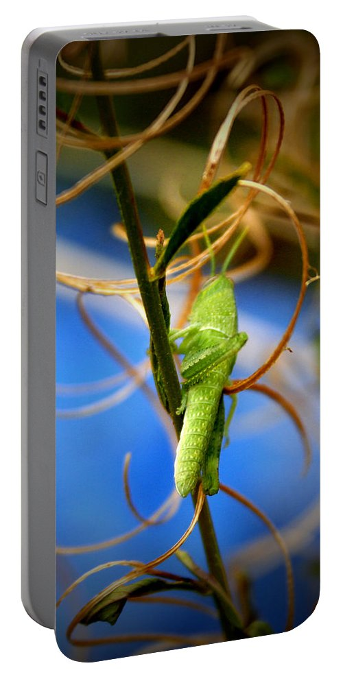 Grasshopper Portable Battery Charger featuring the photograph Grassy Hopper by Chris Brannen