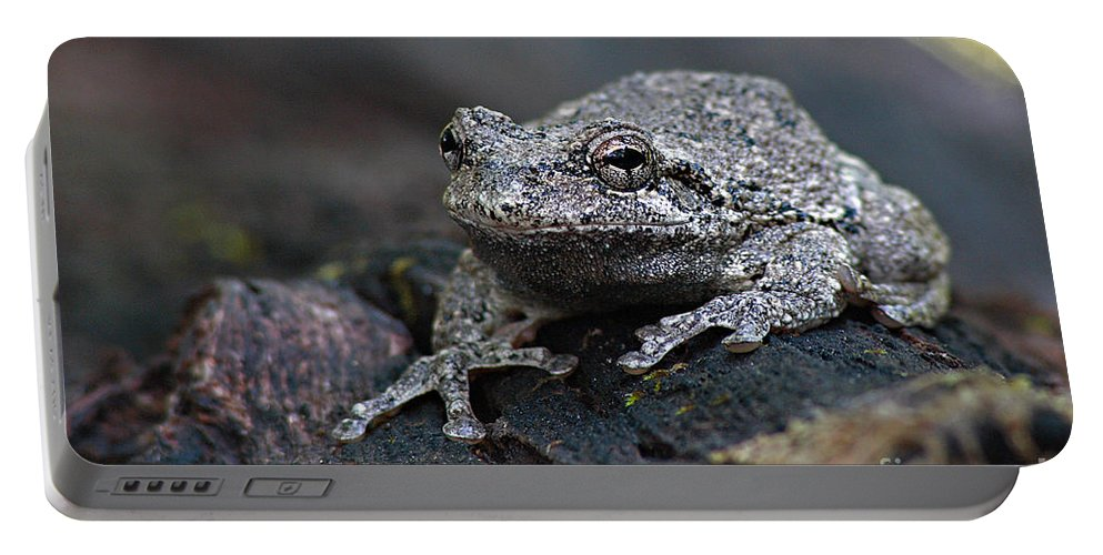 Frog Portable Battery Charger featuring the photograph Gray Treefrog On A Log by Max Allen