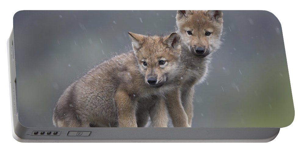 Mp Portable Battery Charger featuring the photograph Gray Wolf Canis Lupus Pups In Light by Tim Fitzharris