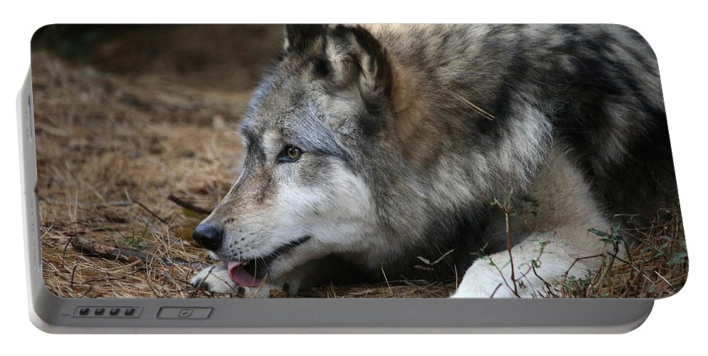 Wolf Portable Battery Charger featuring the photograph Gray Wolf by Karol Livote