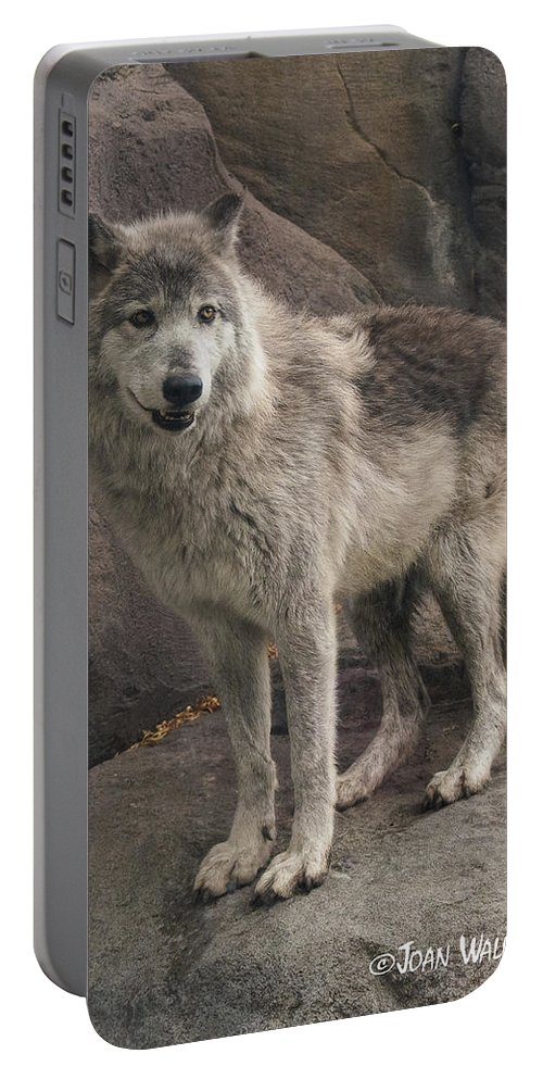 Gray Wolf Portable Battery Charger featuring the photograph Gray Wolf On A Rock by Joan Wallner