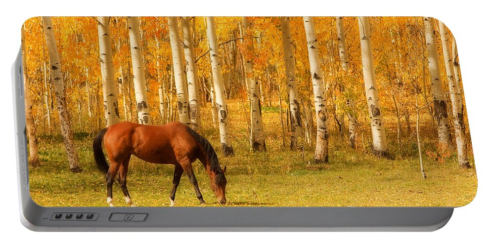 Horse Portable Battery Charger featuring the photograph Grazing Horse In The Autumn Pasture by James BO Insogna