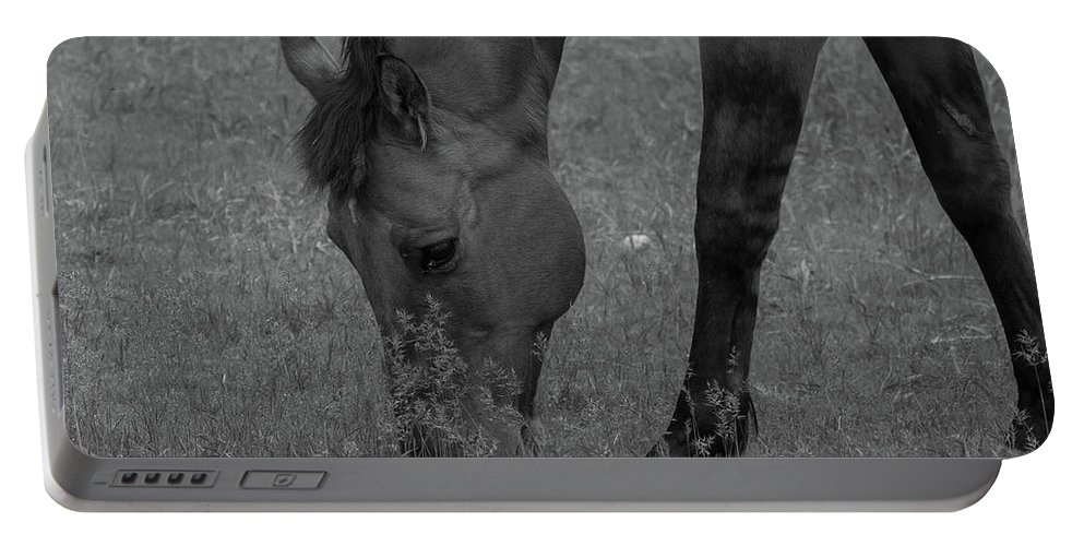 Horse Portable Battery Charger featuring the photograph Grazing by Jacki Smoldon