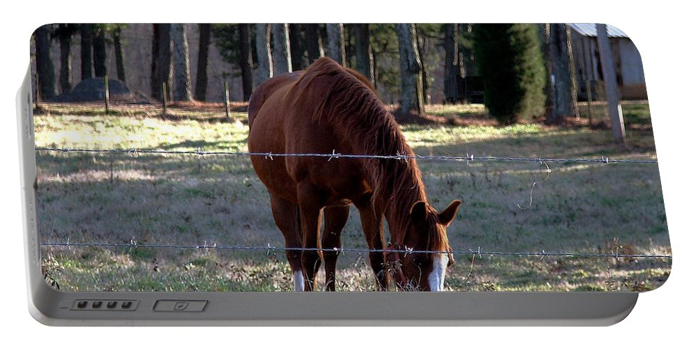 Horse Portable Battery Charger featuring the photograph Grazing by Robert Meanor