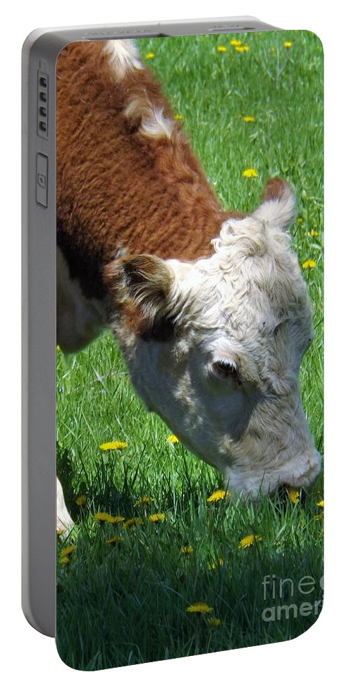 Cow Portable Battery Charger featuring the photograph Grazing Time by Sara Raber