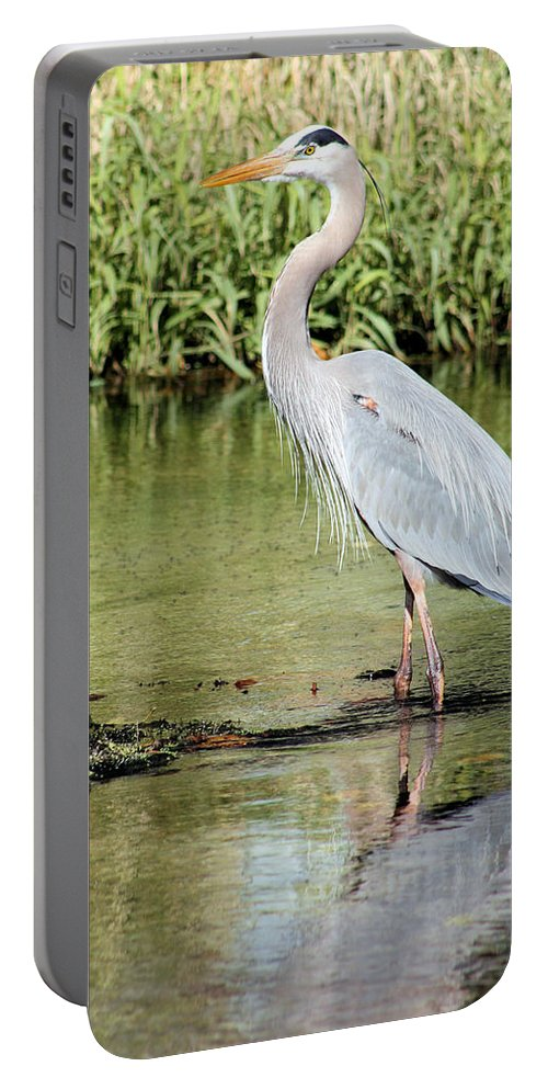 Heron Portable Battery Charger featuring the photograph Great Blue Heron by Kristin Elmquist