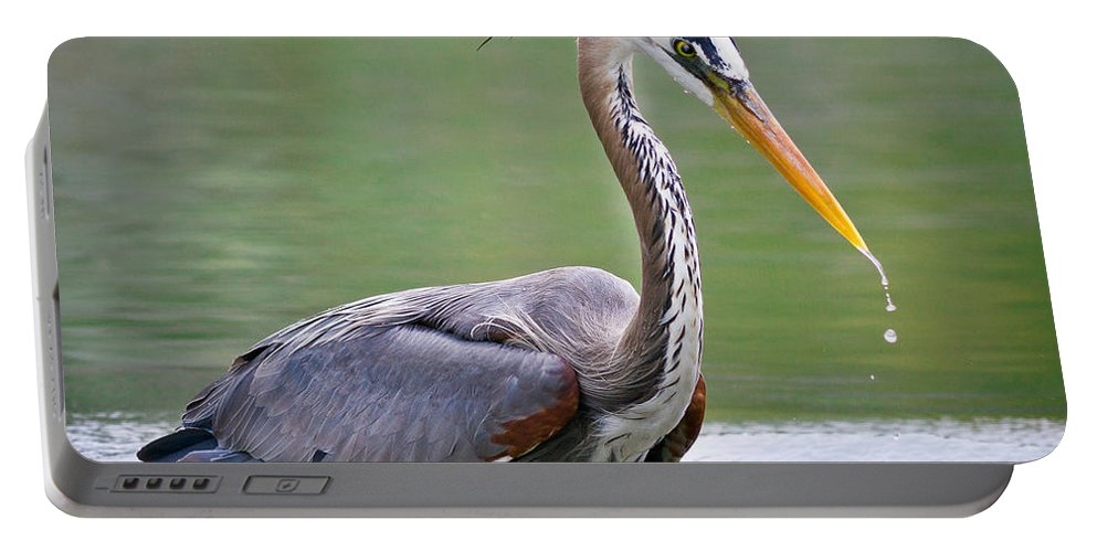 Animals Portable Battery Charger featuring the photograph Great Blue Heron Wading by Rikk Flohr