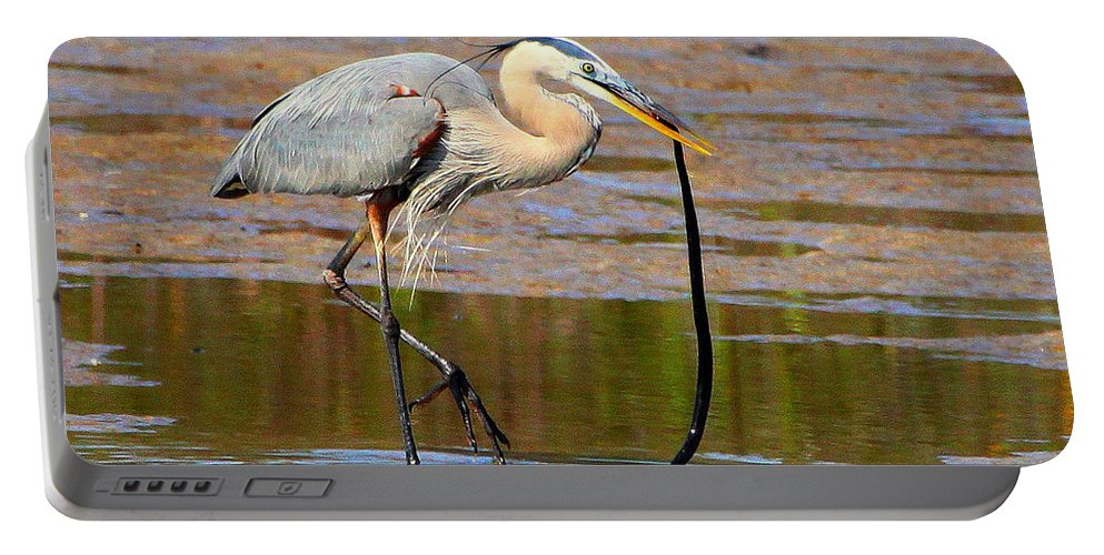 Great Blue Heron Portable Battery Charger featuring the photograph Great Blue Heron Wrestles A Snake by Barbara Bowen