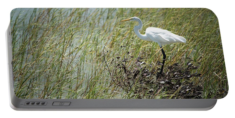 Corpus Christi Aquarium Portable Battery Charger featuring the photograph Great Egret Through Reeds by JG Thompson
