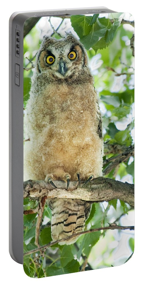Owl Portable Battery Charger featuring the photograph Great Horned Owl by Gary Beeler