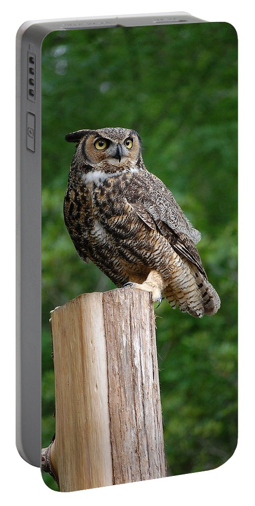 Raptor Portable Battery Charger featuring the photograph Great Horned Owl by Robert Meanor