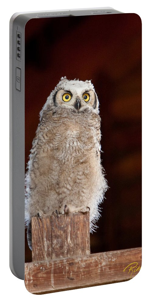 Animals Portable Battery Charger featuring the photograph Great Horned Owlet by Rikk Flohr
