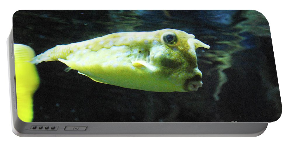 Longhorn-cowfish Portable Battery Charger featuring the photograph Great Longhorn Cowfish Swimming Along Underwater by DejaVu Designs