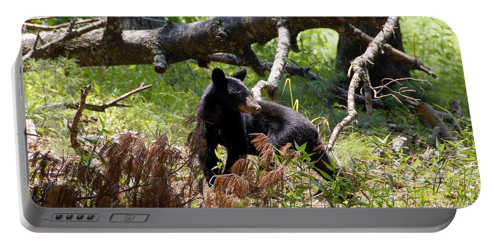 Bear Portable Battery Charger featuring the photograph Great Smoky Mountain Bear by David Lee Thompson