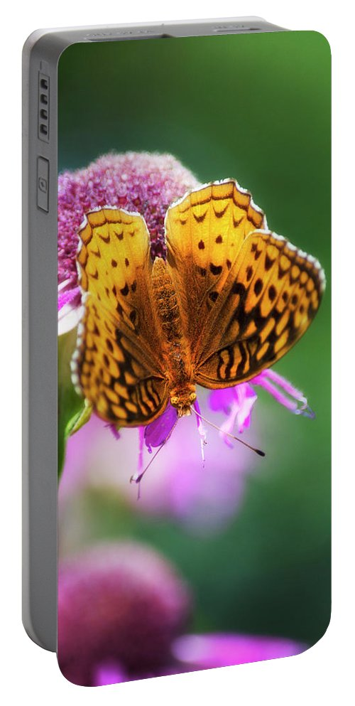 Great Spangled Fritillary Portable Battery Charger featuring the photograph Great Spangled Fritillary Butterfly by Christina Rollo