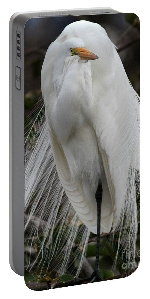 Bird Portable Battery Charger featuring the photograph Great White Egret Windblown by Sabrina L Ryan