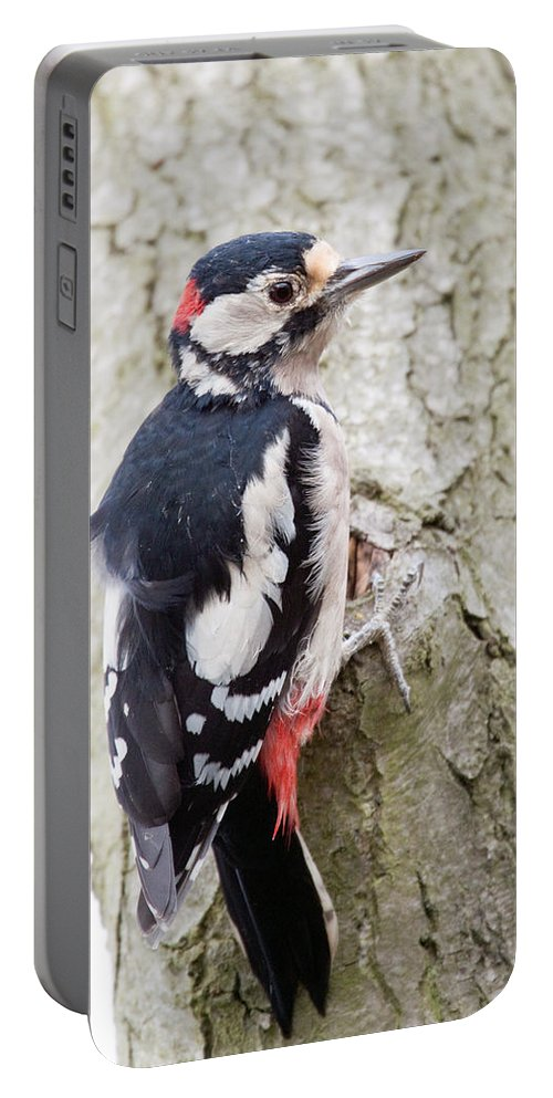 Greater Spotted Woodpecker Portable Battery Charger featuring the photograph Greater Spotted Woodpecker by Bob Kemp