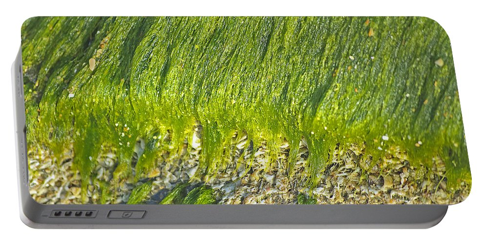 Algae Portable Battery Charger featuring the photograph Green Algae On Rock by Kenneth Albin