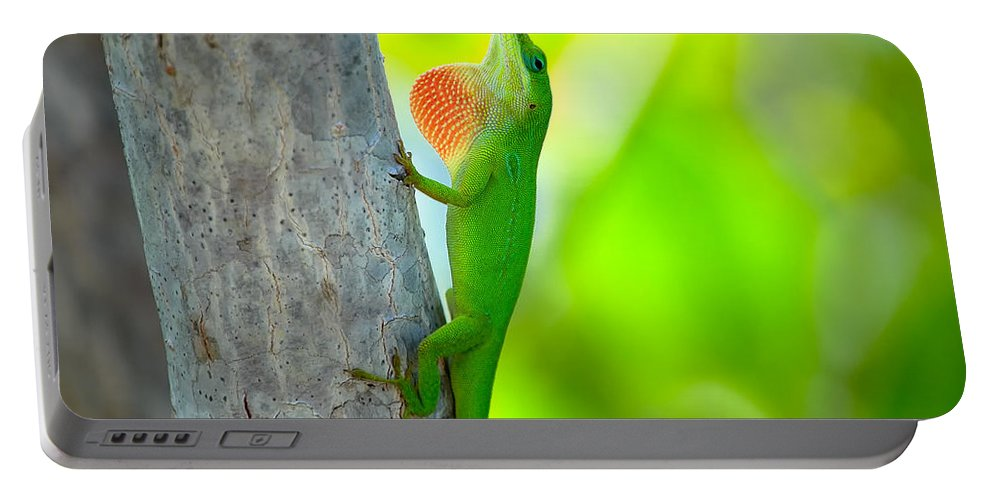 Lizard Portable Battery Charger featuring the photograph Green Anole by Rich Leighton