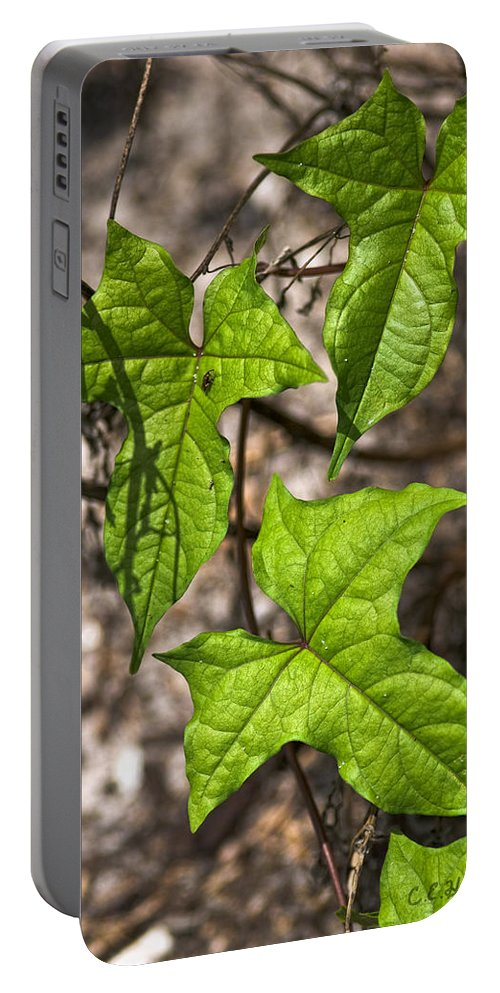 Green Portable Battery Charger featuring the photograph Green Arrowheads by Christopher Holmes