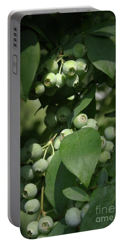 Blueberry Portable Battery Charger featuring the photograph Green Before Blue by Kim Henderson