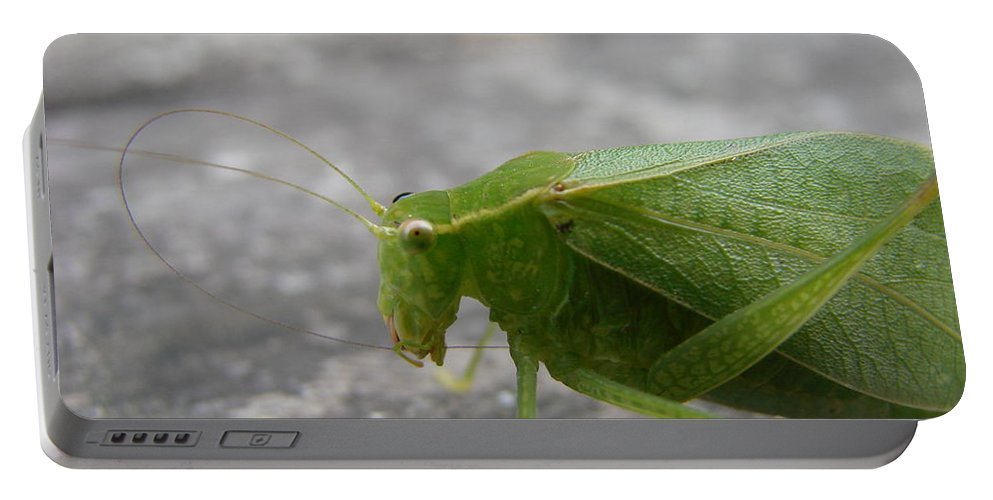 Bugs Portable Battery Charger featuring the photograph Green Bug by Mary Halpin