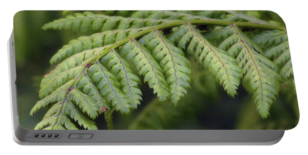 Fern Portable Battery Charger featuring the photograph Green Fern by Kim Tran