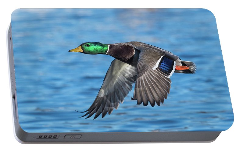 Mallard Portable Battery Charger featuring the photograph Green Head Flyby by Paul Freidlund