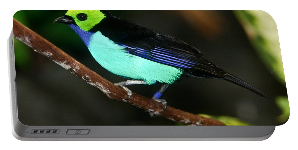 Green Portable Battery Charger featuring the photograph Green Headed Bird On Branch by Douglas Barnett