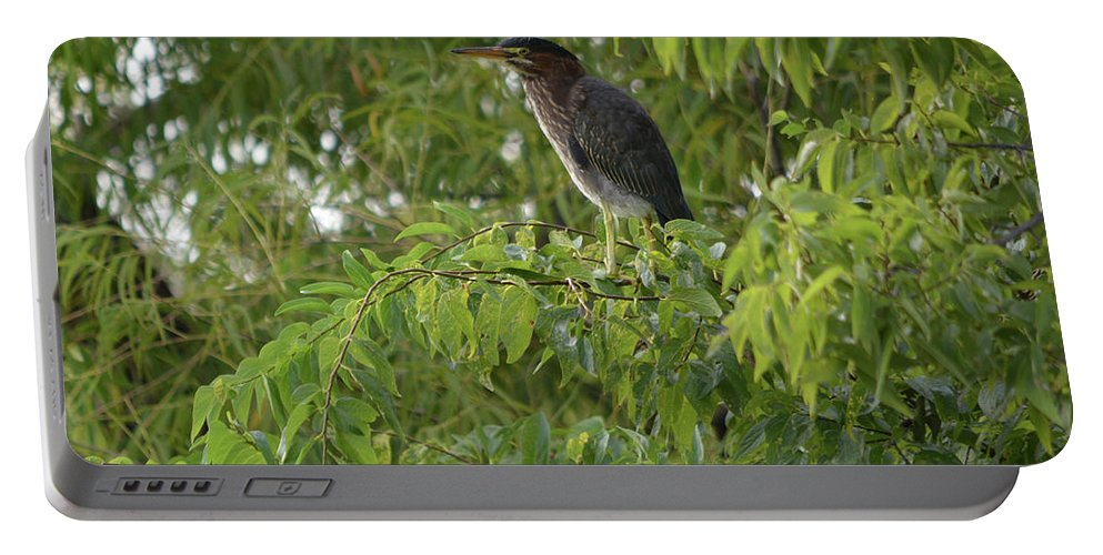 Green Heron In Tree Portable Battery Charger featuring the photograph Green Heron In Tree by Ruth Housley
