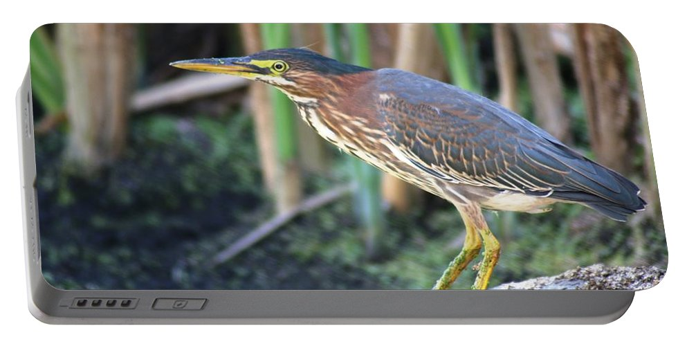 Green Heron Portable Battery Charger featuring the photograph Green Heron by Nick Gustafson
