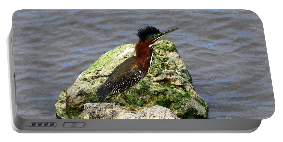 Green Heron Portable Battery Charger featuring the photograph Green Heron Ruffled Feathers by Barbara Bowen