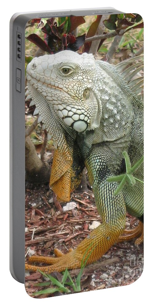 Inguana Portable Battery Charger featuring the photograph Green Inguana by Christiane Schulze Art And Photography