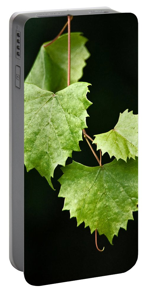 Flora Portable Battery Charger featuring the photograph Green Leaves by Christopher Holmes